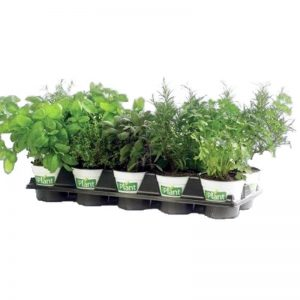 Fines Herbes Iplant