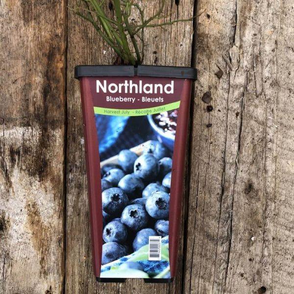 Bleuet Northland