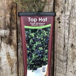 Bleuet Patio Top Hat