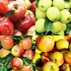 4 en 1 pommier Combination apple